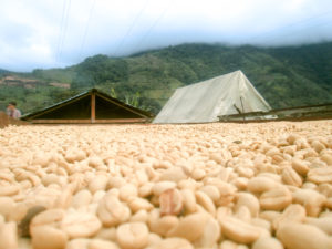 コロンビア 豆乾燥
