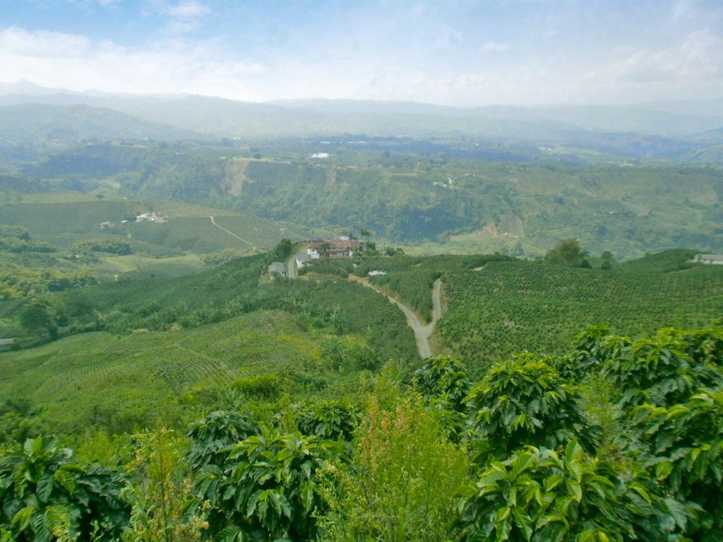 コロンビア農園