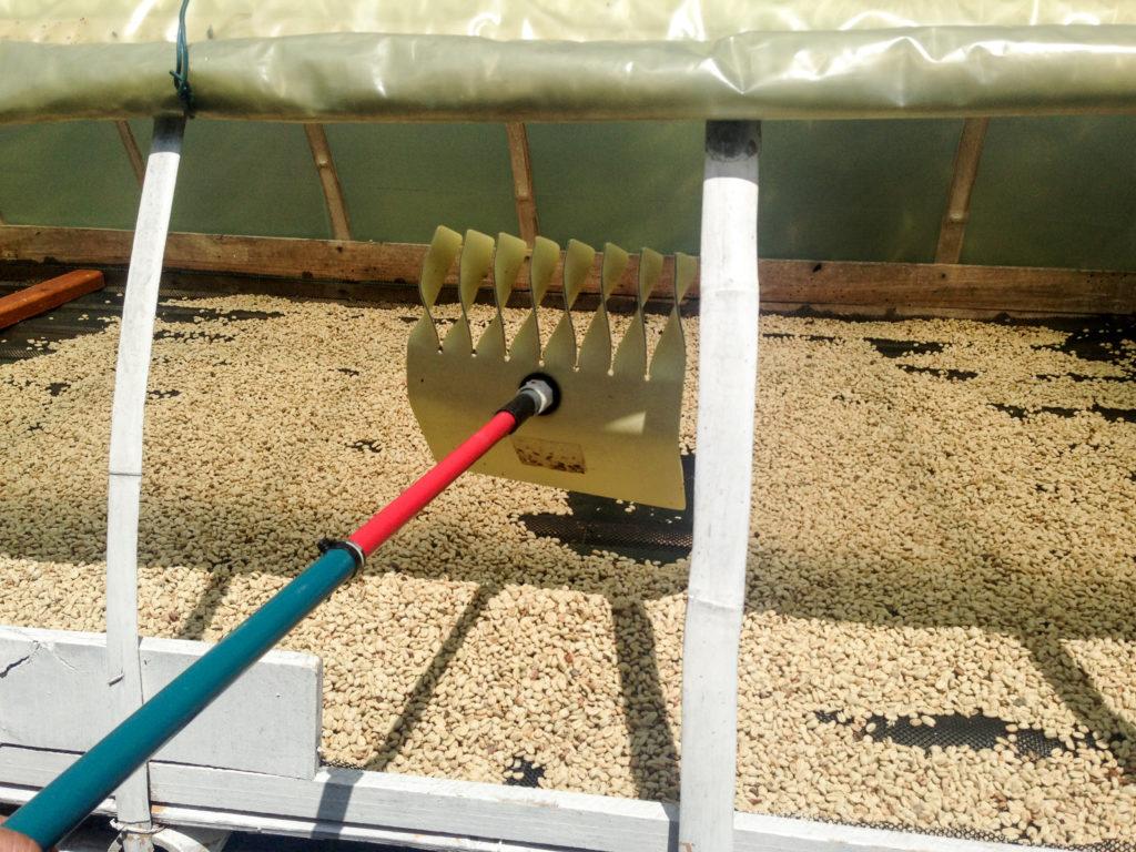 コロンビア豆乾燥