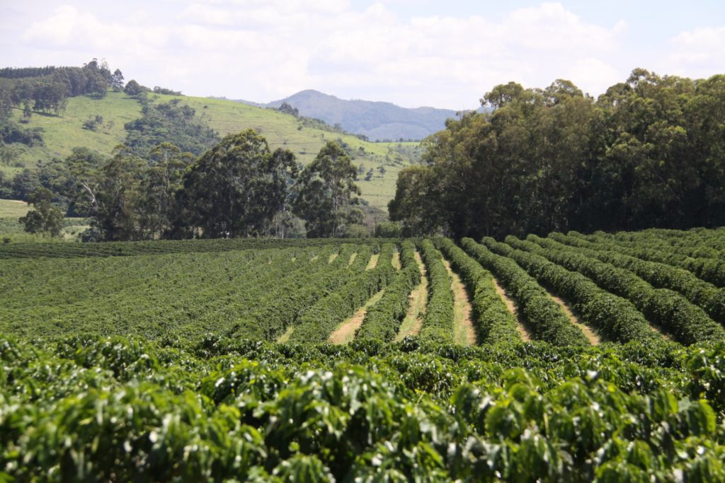 農園の風景