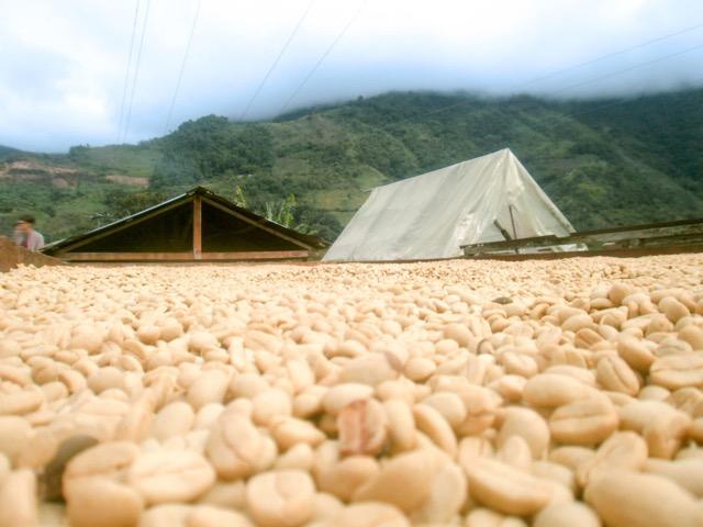 コロンビアコーヒー乾燥