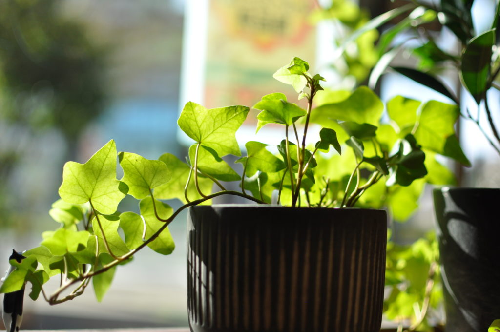 だんの観葉植物